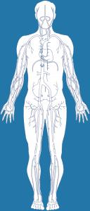 diabete-anatomy